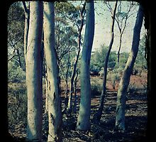 Salmon Gums by Melissa Drummond