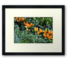 Green and Orange Framed Print