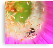 Insect in a flower.  Canvas Print