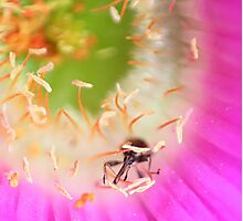 Insect in a flower.  Photographic Print