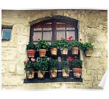 Potted Plants Poster