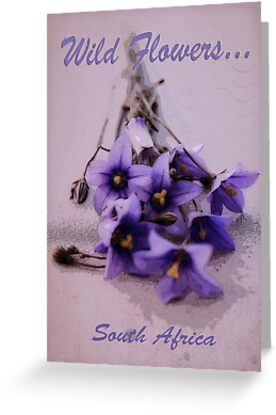 Wild Flowers - South Africa by Qnita