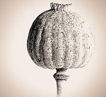 Poppy Head 05 by Simon Lupton