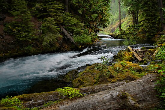 All Of Her Beauty by Charles & Patricia   Harkins ~ Picture Oregon