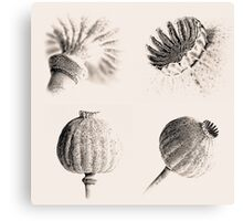 Poppy Heads Collection 5678 Canvas Print