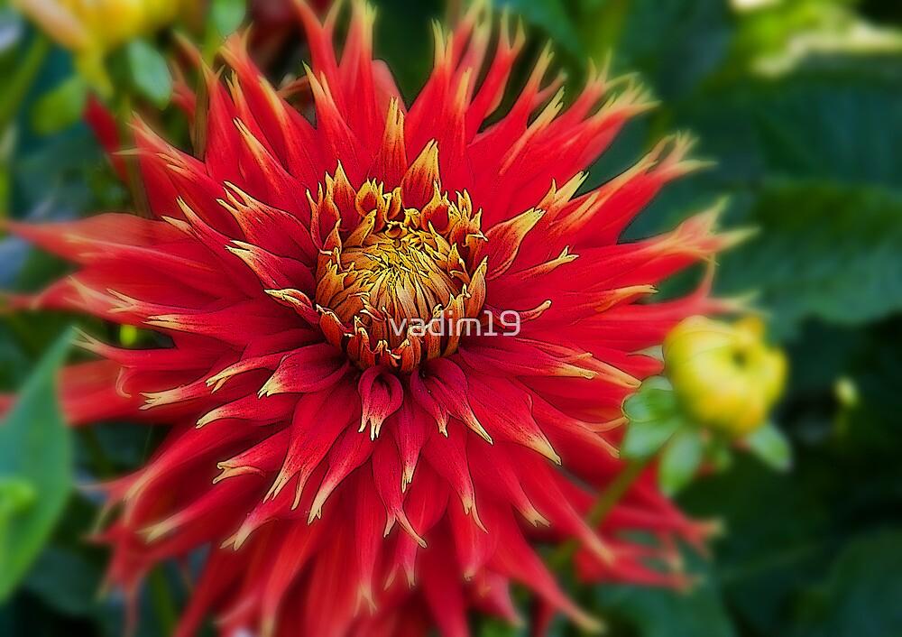 Canada. Vancouver Island. Butchart Gardens. Flower. by vadim19