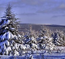 Winter Wonderland by Richard Burton