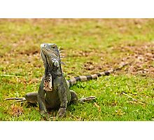 Iguana on Saint Marten Island Photographic Print