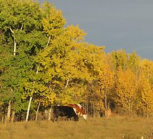 Autumn Cows by Kathi Arnell