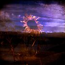 Sunflower by Mandy Kerr