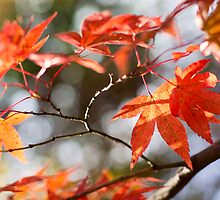 Autumn Leaves 4 by Natalie Broome