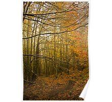 Nel bosco in autunno Poster
