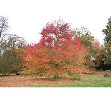 Audley End, Essex Photographic Print