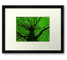 The Glass Tree Framed Print