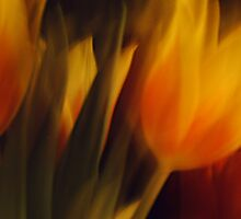 Flowers of Fire by Benedikt Amrhein
