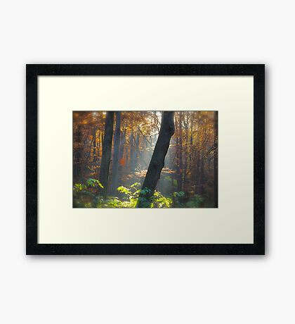 5 ★★★★★ . Autumn Miracle . November . by Brown Sugar . Favorites: 11 Views: 359 . thanks ! featured Canon Photography Only. Framed Print