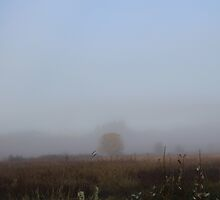 Tree in the Fog by Eggtooth