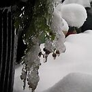 frozen it time ! by nutchip