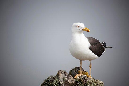 Posed Gull by Anne Gilbert