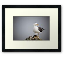 Posed Gull Framed Print
