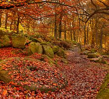 Padley Gorge. by cameraimagery