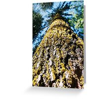 Moss, Bark, Sky Greeting Card