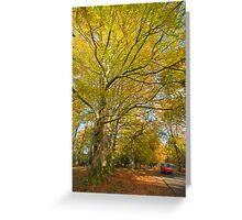 New Forest in autumn Greeting Card