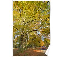New Forest in autumn Poster