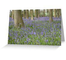 Bluebells, Micheldever Forest Greeting Card