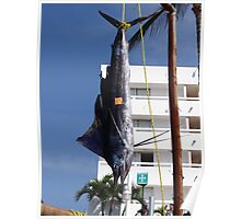 Indo- Pacific sailfish Poster
