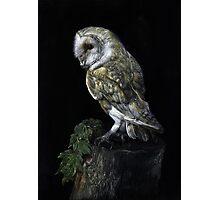 Barney the Barn Owl Photographic Print
