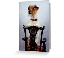 Dog on a chair Greeting Card