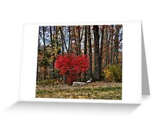 Fire Bush Greeting Card