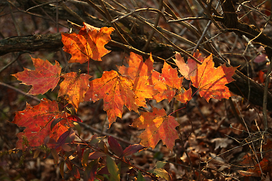 The Transparency of Fall by Thomas Murphy