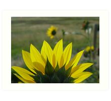 MONTANA SUNFLOWER ON THE HALFSHELL Art Print