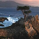 Lone Cypress at Sunset by Richard Rushton