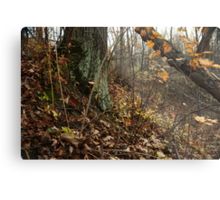 A Sloping Forest Scene Metal Print