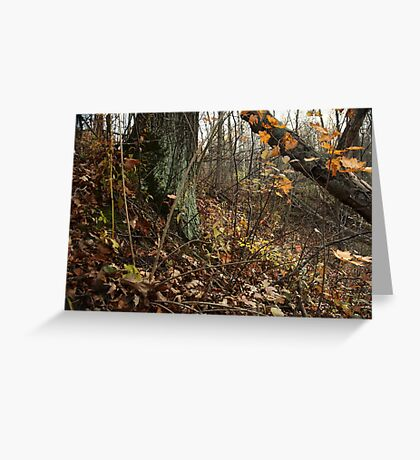 A Sloping Forest Scene Greeting Card