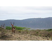 The Watcher - Waterbuck  Photographic Print