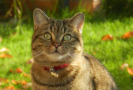 Autumn sunshine on Boris by weecritter