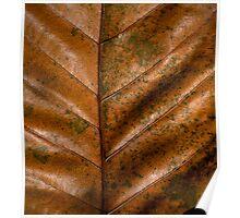 Dried  Leaf Poster