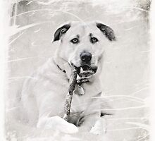 Doggie Stogie.... by Karen  Helgesen