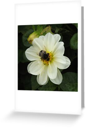Bumble Bee by Vanessa Saxby