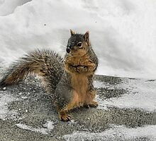 Brrrrrrr Have you seen my mittens?  by Melissa Carlini