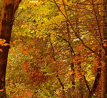 Autumn Bower by Diane Schuster
