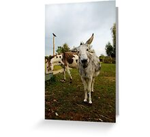 The inquisitive Donkey Greeting Card