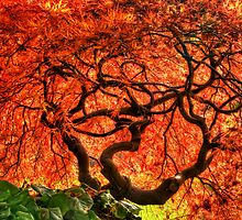 Maple Matrix by Tracy Riddell