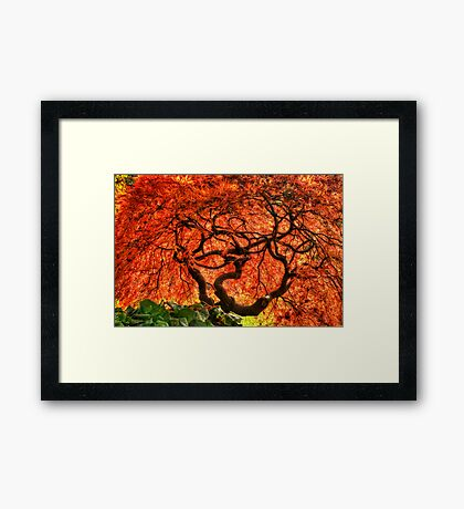 Maple Matrix Framed Print