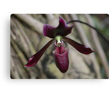 Deep, Dark Orchid Flower Canvas Print