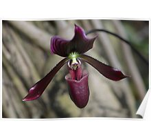 Deep, Dark Orchid Flower Poster